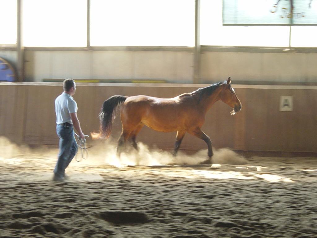 seminare pferde