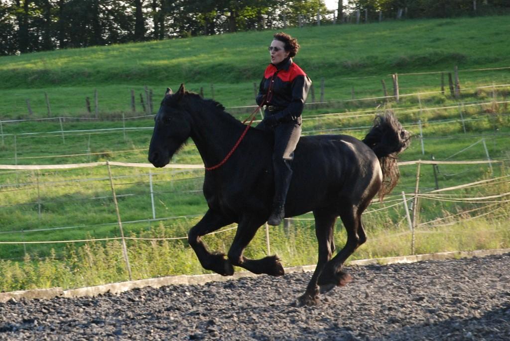 PferdeTeil3 001A
